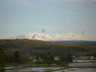 木育広場から望む大雪山